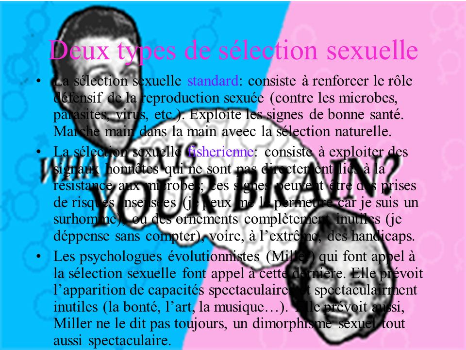 Deux types de sélection sexuelle La sélection sexuelle standard: consiste à renforcer le rôle défensif de la reproduction sexuée (contre les microbes, parasites, virus, etc.).