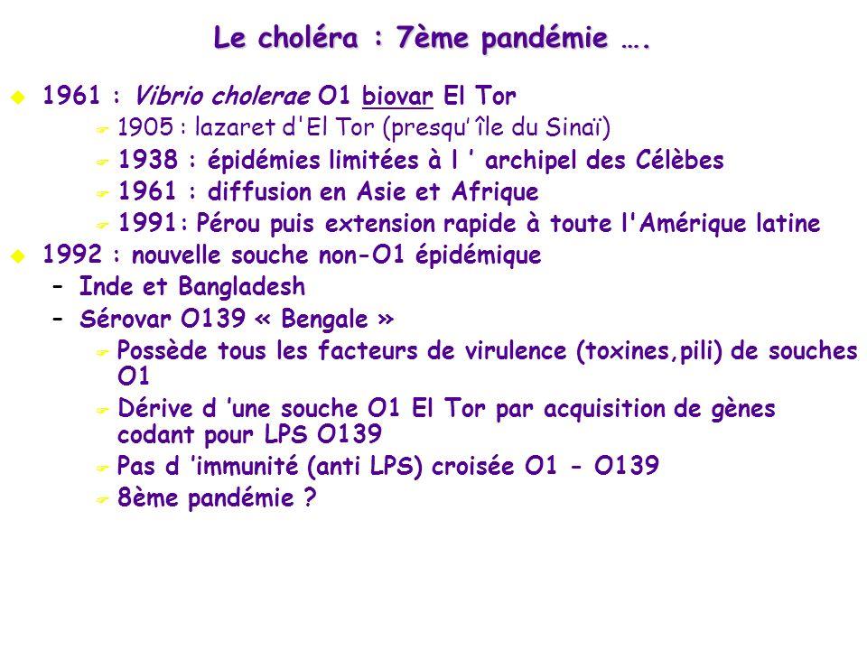 1961 : Vibrio cholerae O1 biovar El Tor 1905 : lazaret d'El Tor (presqu île du Sinaï) 1938 : épidémies limitées à l archipel des Célèbes 1961 : diffus