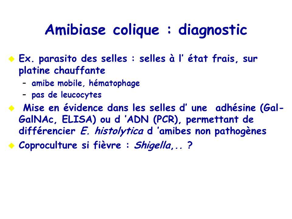 Amibiase colique : diagnostic Ex. parasito des selles : selles à l état frais, sur platine chauffante –amibe mobile, hématophage –pas de leucocytes Mi