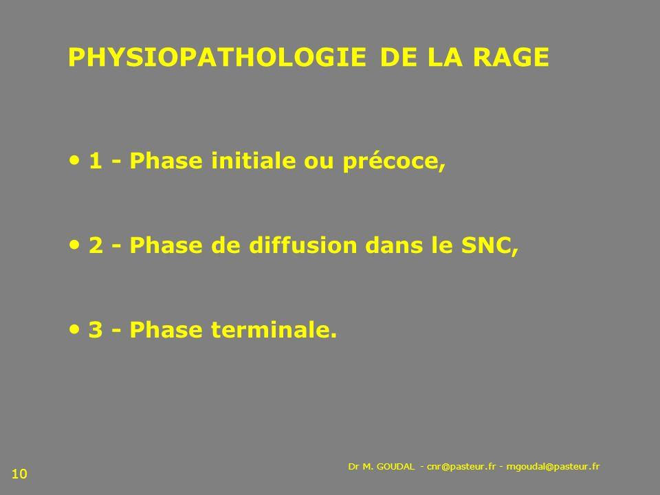 Dr M. GOUDAL - cnr@pasteur.fr - mgoudal@pasteur.fr 10 PHYSIOPATHOLOGIE DE LA RAGE 1 - Phase initiale ou précoce, 2 - Phase de diffusion dans le SNC, 3