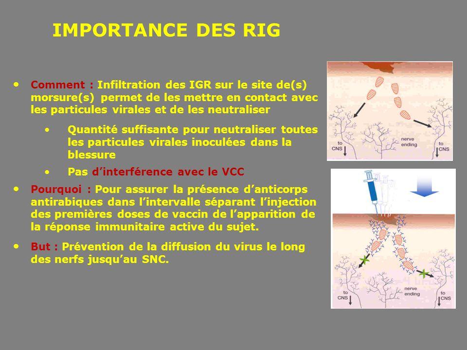 IMPORTANCE DES RIG Comment : Infiltration des IGR sur le site de(s) morsure(s) permet de les mettre en contact avec les particules virales et de les n