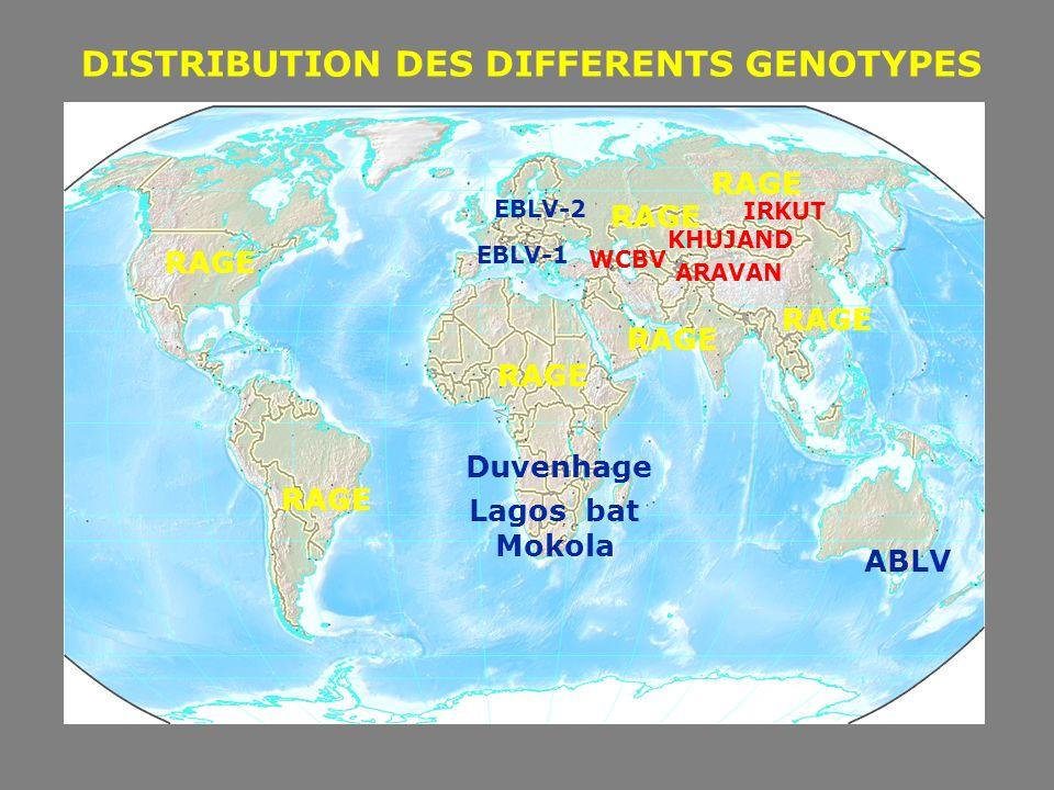 Dr M.GOUDAL - cnr@pasteur.fr - mgoudal@pasteur.fr 17 INCUBATION DE LA RAGE (Fisben,D.