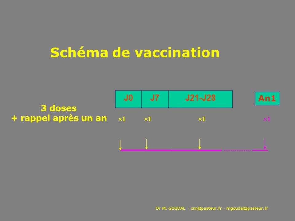 1 1 1 1 J0J7J21-J28 Schéma de vaccination An1 3 doses + rappel après un an Dr M. GOUDAL - cnr@pasteur.fr - mgoudal@pasteur.fr