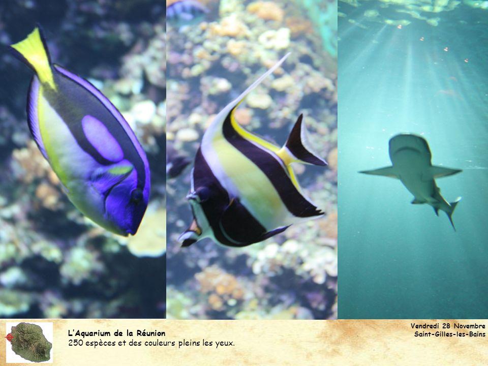LAquarium de la Réunion 250 espèces et des couleurs pleins les yeux. Vendredi 28 Novembre Saint-Gilles-les-Bains