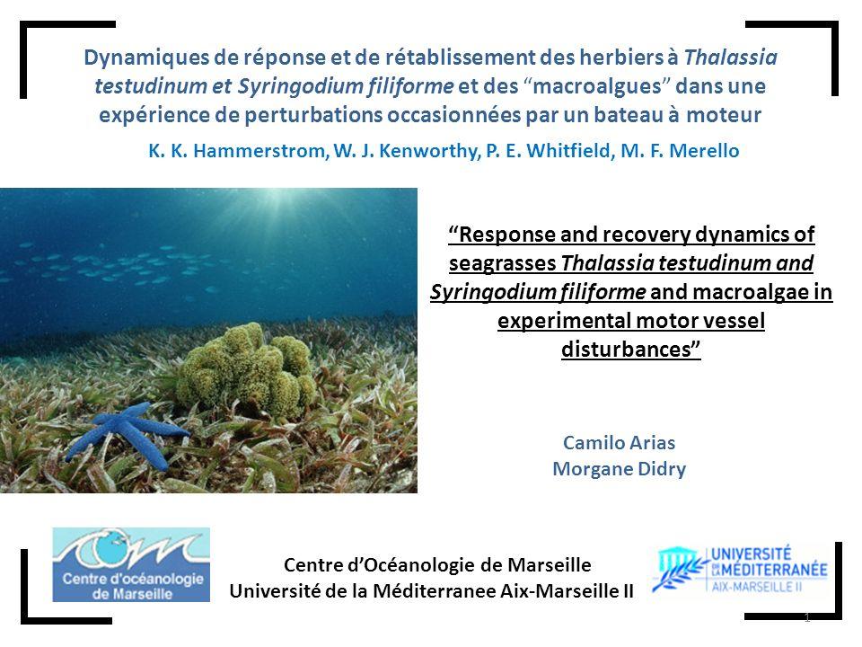 Introduction Expérience dexcavationExpérience de remplissageConclusions Banc de corail Porites sp.