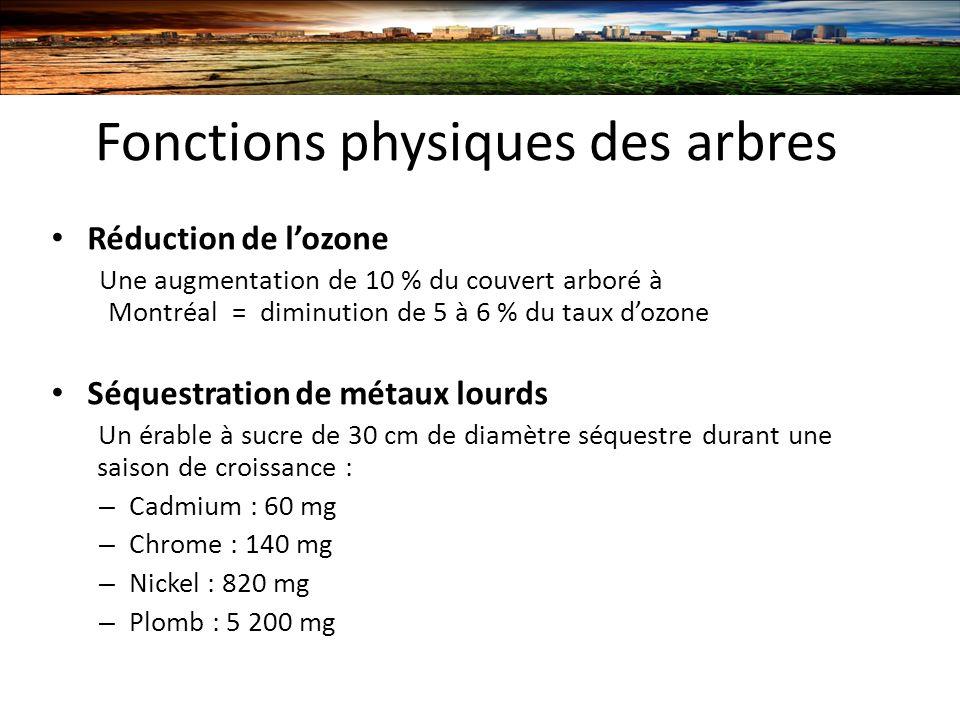 Fonctions physiques des arbres Réduction de lozone Une augmentation de 10 % du couvert arboré à Montréal = diminution de 5 à 6 % du taux dozone Séquestration de métaux lourds Un érable à sucre de 30 cm de diamètre séquestre durant une saison de croissance : – Cadmium : 60 mg – Chrome : 140 mg – Nickel : 820 mg – Plomb : 5 200 mg