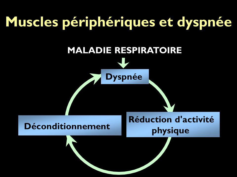 MALADIE RESPIRATOIRE Dyspnée Déconditionnement Réduction d activité physique Muscles périphériques et dyspnée