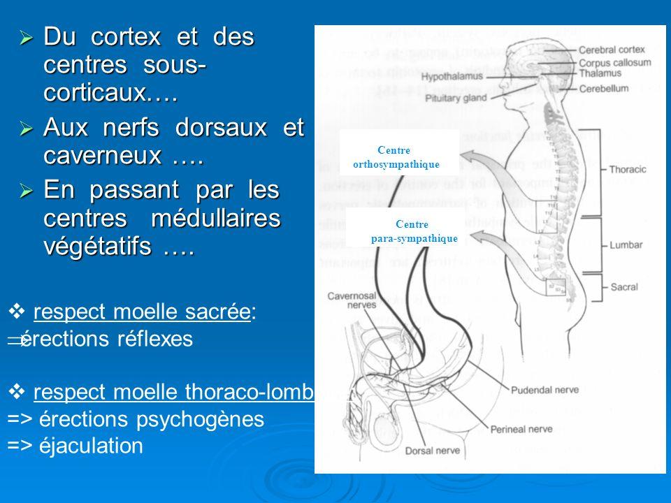 Centre orthosympathique Centre para-sympathique Du cortex et des centres sous- corticaux…. Du cortex et des centres sous- corticaux…. Aux nerfs dorsau