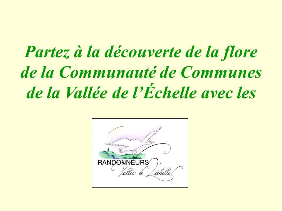 Partez à la découverte de la flore de la Communauté de Communes de la Vallée de lÉchelle avec les