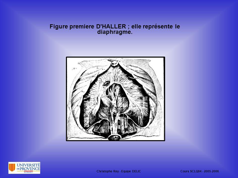 Christophe Rey - Equipe DELICCours SCLQ04 - 2005-2006 Figure premiere D HALLER ; elle représente le diaphragme.