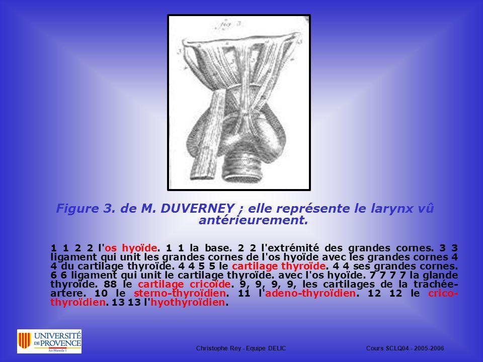 Figure 3.de M. DUVERNEY ; elle représente le larynx vû antérieurement.