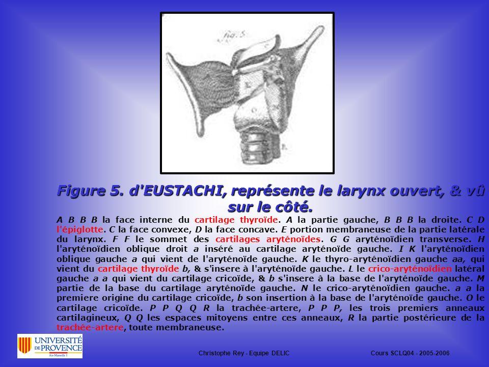 Figure 5.d EUSTACHI, représente le larynx ouvert, & vû sur le côté.