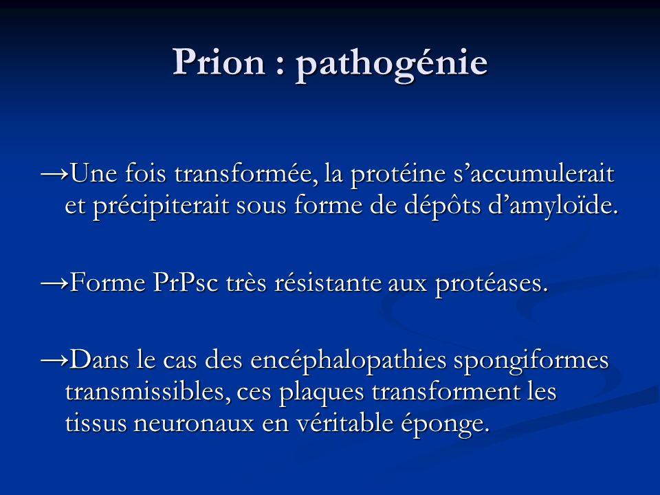 Prion : pathogénie Une fois transformée, la protéine saccumulerait et précipiterait sous forme de dépôts damyloïde. Forme PrPsc très résistante aux pr