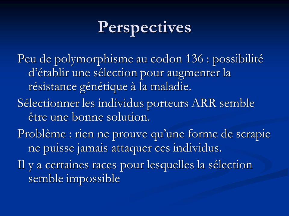 Perspectives Peu de polymorphisme au codon 136 : possibilité détablir une sélection pour augmenter la résistance génétique à la maladie. Sélectionner
