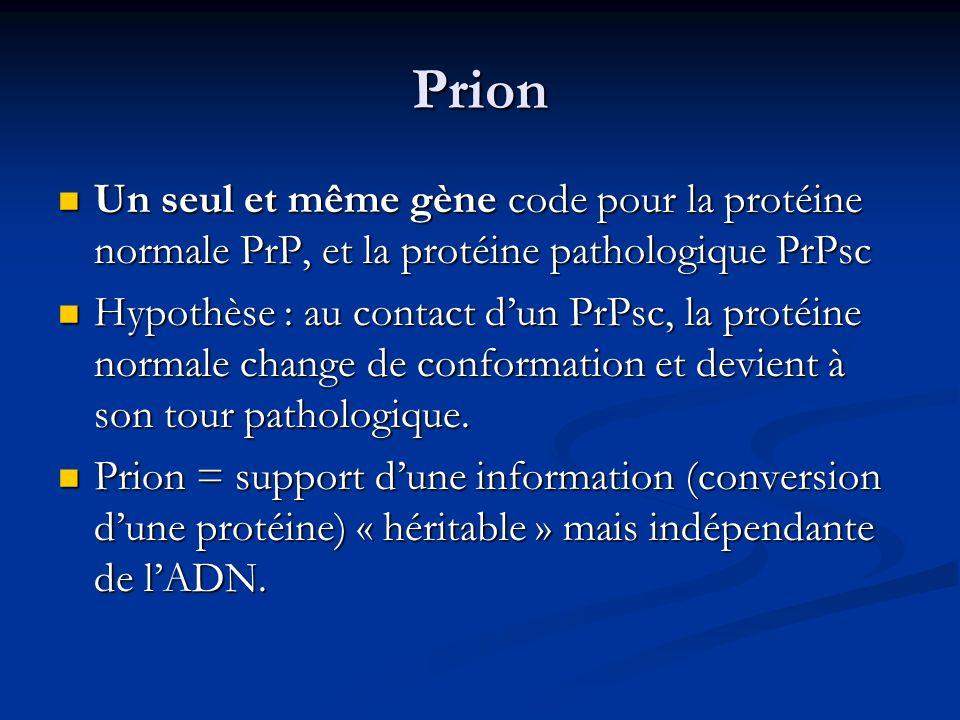 Prion Un seul et même gène code pour la protéine normale PrP, et la protéine pathologique PrPsc Un seul et même gène code pour la protéine normale PrP
