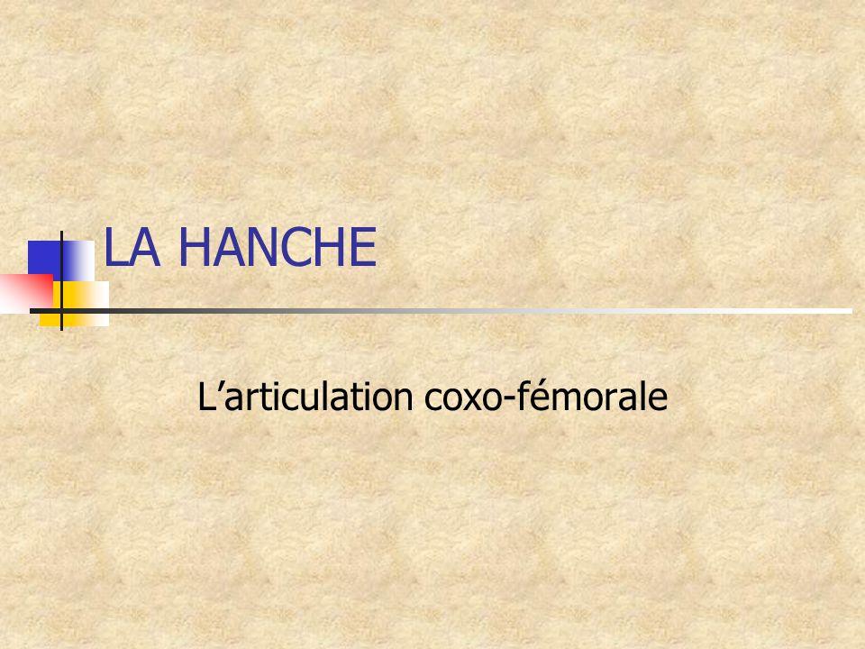 LA HANCHE Larticulation coxo-fémorale