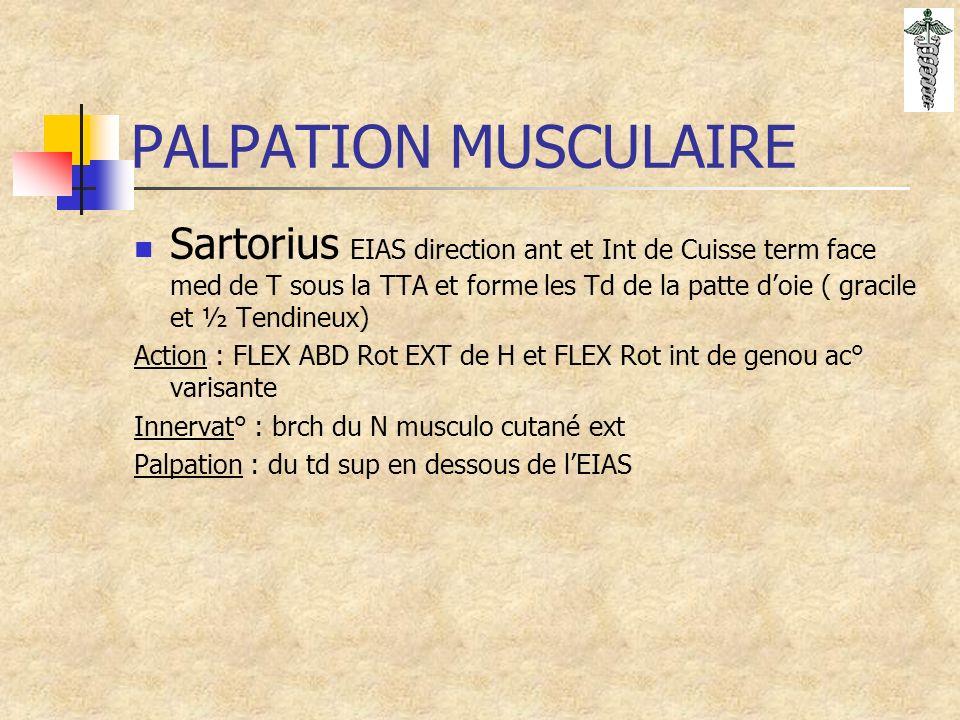 PALPATION MUSCULAIRE Sartorius EIAS direction ant et Int de Cuisse term face med de T sous la TTA et forme les Td de la patte doie ( gracile et ½ Tendineux) Action : FLEX ABD Rot EXT de H et FLEX Rot int de genou ac° varisante Innervat° : brch du N musculo cutané ext Palpation : du td sup en dessous de lEIAS