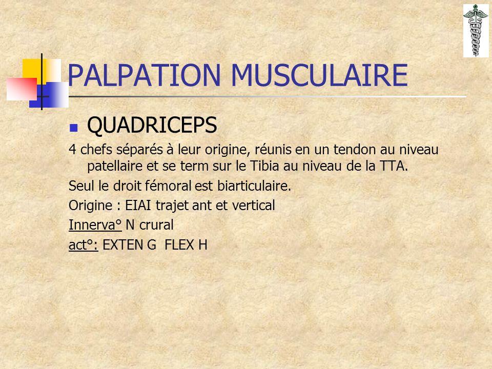PALPATION MUSCULAIRE QUADRICEPS 4 chefs séparés à leur origine, réunis en un tendon au niveau patellaire et se term sur le Tibia au niveau de la TTA.