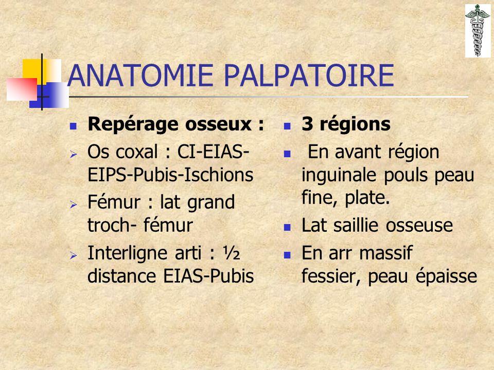 ANATOMIE PALPATOIRE Repérage osseux : Os coxal : CI-EIAS- EIPS-Pubis-Ischions Fémur : lat grand troch- fémur Interligne arti : ½ distance EIAS-Pubis 3 régions En avant région inguinale pouls peau fine, plate.