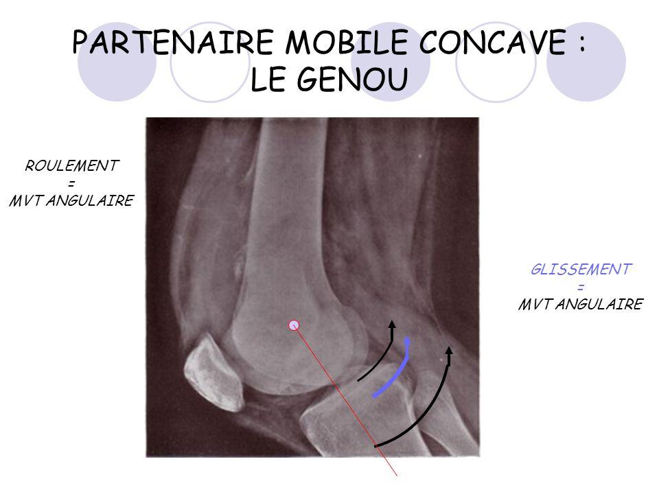 PARTENAIRE MOBILE CONCAVE : LE GENOU ROULEMENT = MVT ANGULAIRE GLISSEMENT = MVT ANGULAIRE