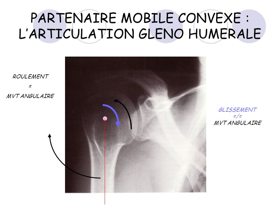 PARTENAIRE MOBILE CONVEXE : LARTICULATION GLENO HUMERALE ROULEMENT = MVT ANGULAIRE GLISSEMENT =/= MVT ANGULAIRE