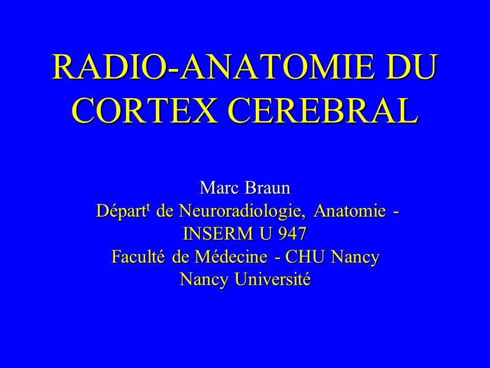 RADIO-ANATOMIE DU CORTEX CEREBRAL Marc Braun Départ t de Neuroradiologie, Anatomie - INSERM U 947 Faculté de Médecine - CHU Nancy Nancy Université