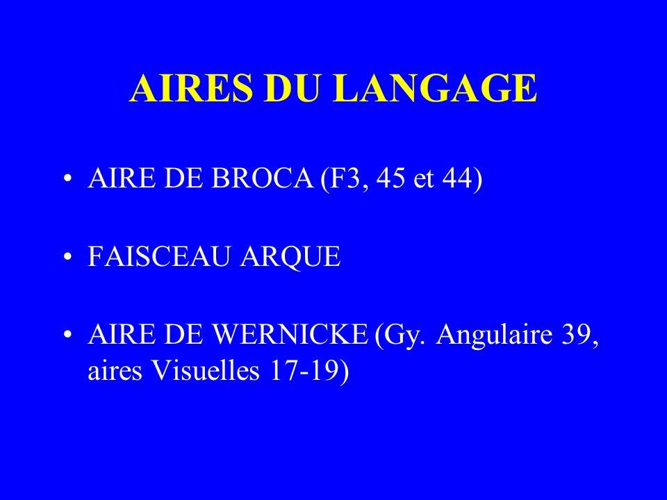 AIRES DU LANGAGE AIRE DE BROCA (F3, 45 et 44) FAISCEAU ARQUE AIRE DE WERNICKE (Gy. Angulaire 39, aires Visuelles 17-19)