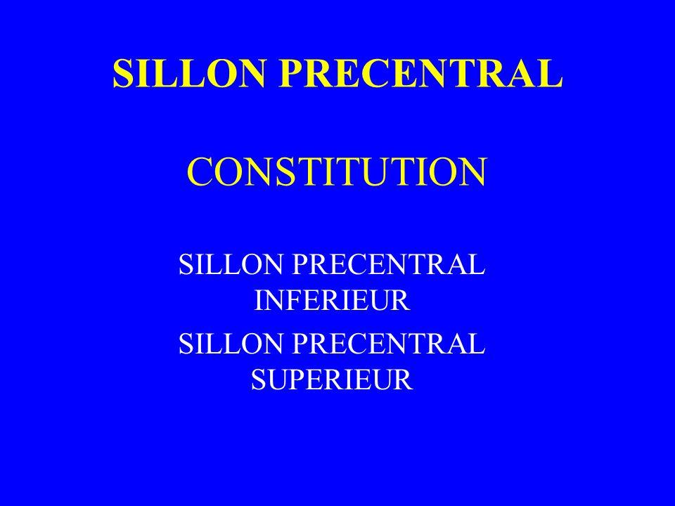 SILLON PRECENTRAL CONSTITUTION SILLON PRECENTRAL INFERIEUR SILLON PRECENTRAL SUPERIEUR