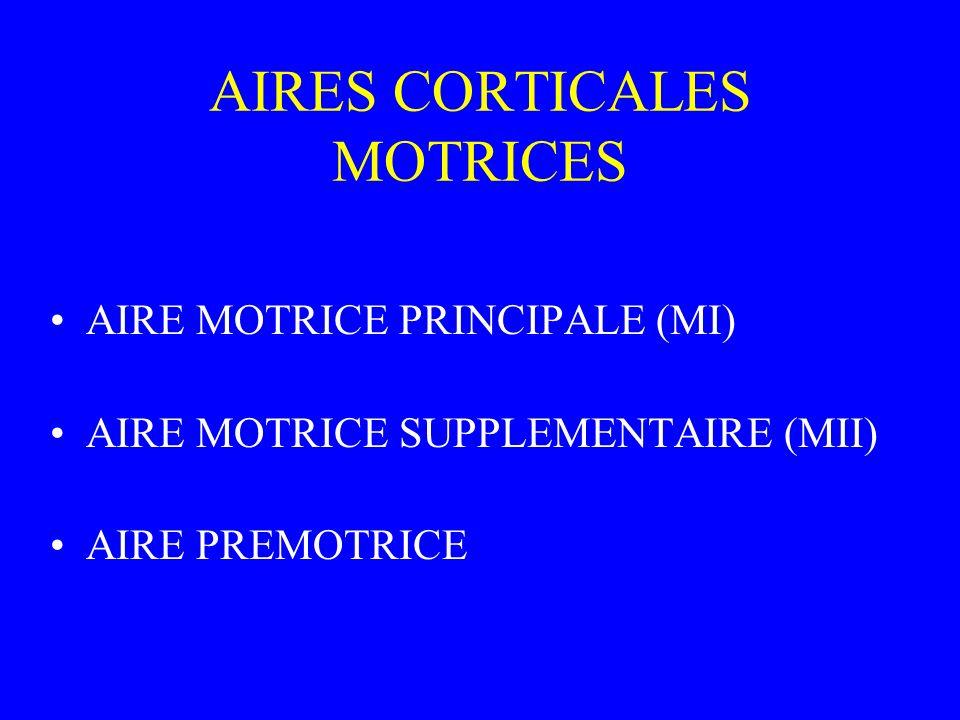 AIRES CORTICALES MOTRICES AIRE MOTRICE PRINCIPALE (MI) AIRE MOTRICE SUPPLEMENTAIRE (MII) AIRE PREMOTRICE