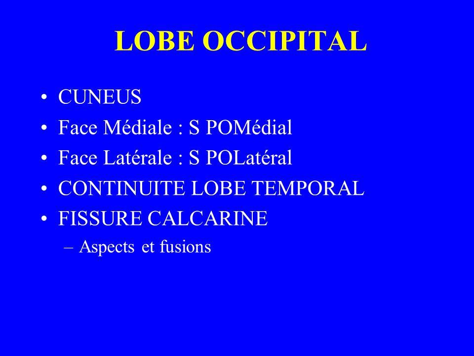 LOBE OCCIPITAL CUNEUS Face Médiale : S POMédial Face Latérale : S POLatéral CONTINUITE LOBE TEMPORAL FISSURE CALCARINE –Aspects et fusions