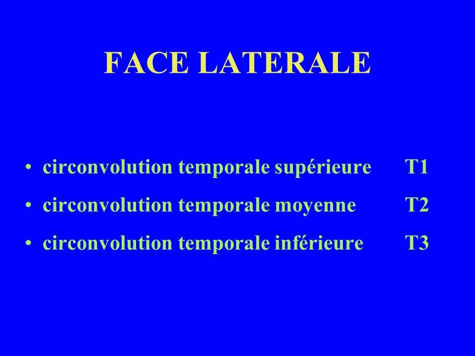 FACE LATERALE circonvolution temporale supérieureT1 circonvolution temporale moyenneT2 circonvolution temporale inférieureT3