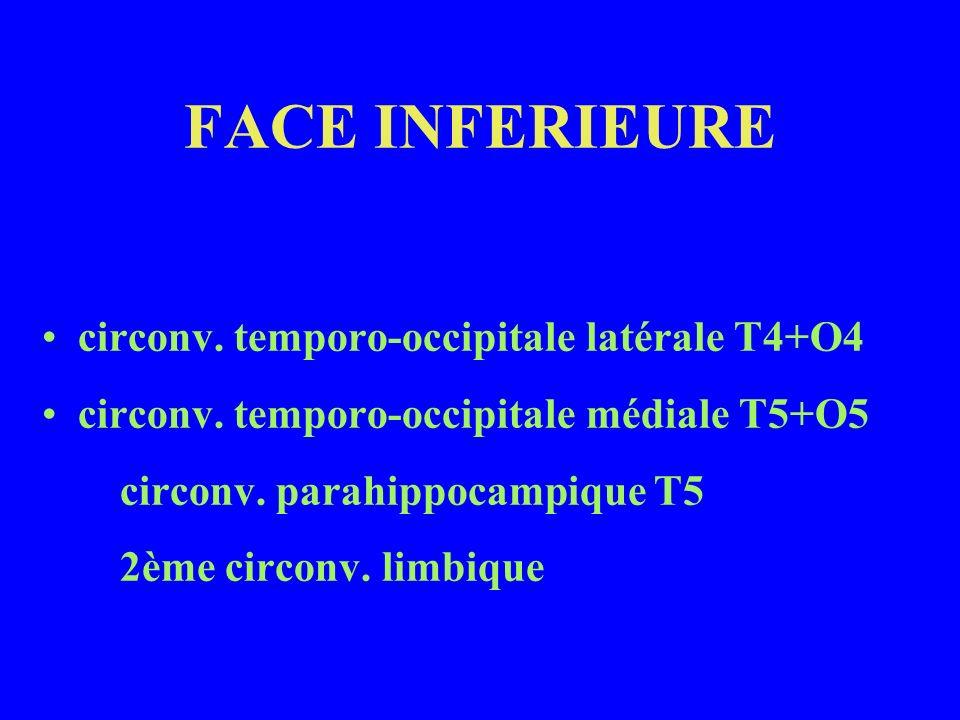 FACE INFERIEURE circonv. temporo-occipitale latérale T4+O4 circonv. temporo-occipitale médiale T5+O5 circonv. parahippocampique T5 2ème circonv. limbi