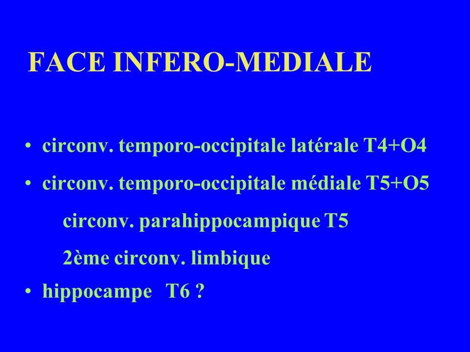 FACE INFERO-MEDIALE circonv. temporo-occipitale latérale T4+O4 circonv. temporo-occipitale médiale T5+O5 circonv. parahippocampique T5 2ème circonv. l