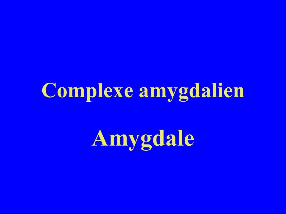 Complexe amygdalien Amygdale