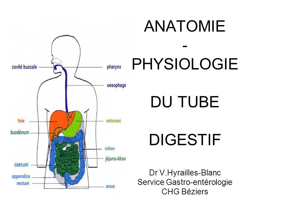 LES VOIES DIGESTIVES SUP Mastication : réflexe ou volontaire (obtention dun bolus) DIGESTION Sécrétions salivaires : mucus, enzymes (lipase), IgA, électrolytes DIGESTION/ DEFENSE BACTERIENNE / DEGLUTITION Phases de la déglutition ; buccale (volontaire), pharyngienne (apnée, réflexe, centre bulbaire), oesophagienne Absorption buccale : médicaments, évite le passage hépatique (inactivation, rapidité), VCS Goût : sucré (pointe), acide/salé (parois latérales), amer (V) Rôle et phénomènes buccaux