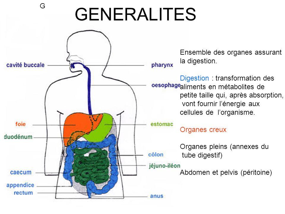 FOIE : anatomie Poids : 1,2-1,5 Kg 2 hémi foies (Dt et G), 2 lobes (Dt et G), segments hépatiques Double vascularisation : VPorte (fonction métabolique) AHépatique (oxygénation) mélange dans les sinusoides Canaux biliaires : canalicules, canaux hépatiques Dt et G, canal hépatique commun, cholédoque Bile : -contient eau, électrolytes, acides biliaires, pigments biliaires, cholestérol -synthèse continue, stockage dans vésicule, excrétion duodénale perprandiale (CCK, SNA) -rôle : acides biliaires émulsionnent les lipides et le vitamines liposolubles