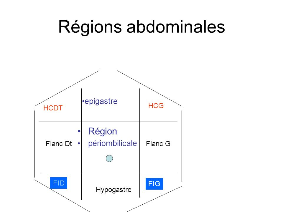 Segmentation hépatique LOBE G FOIE G (+IV)