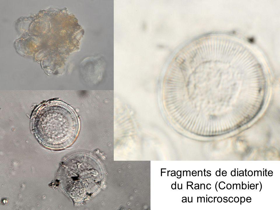 Fragments de diatomite du Ranc (Combier) au microscope