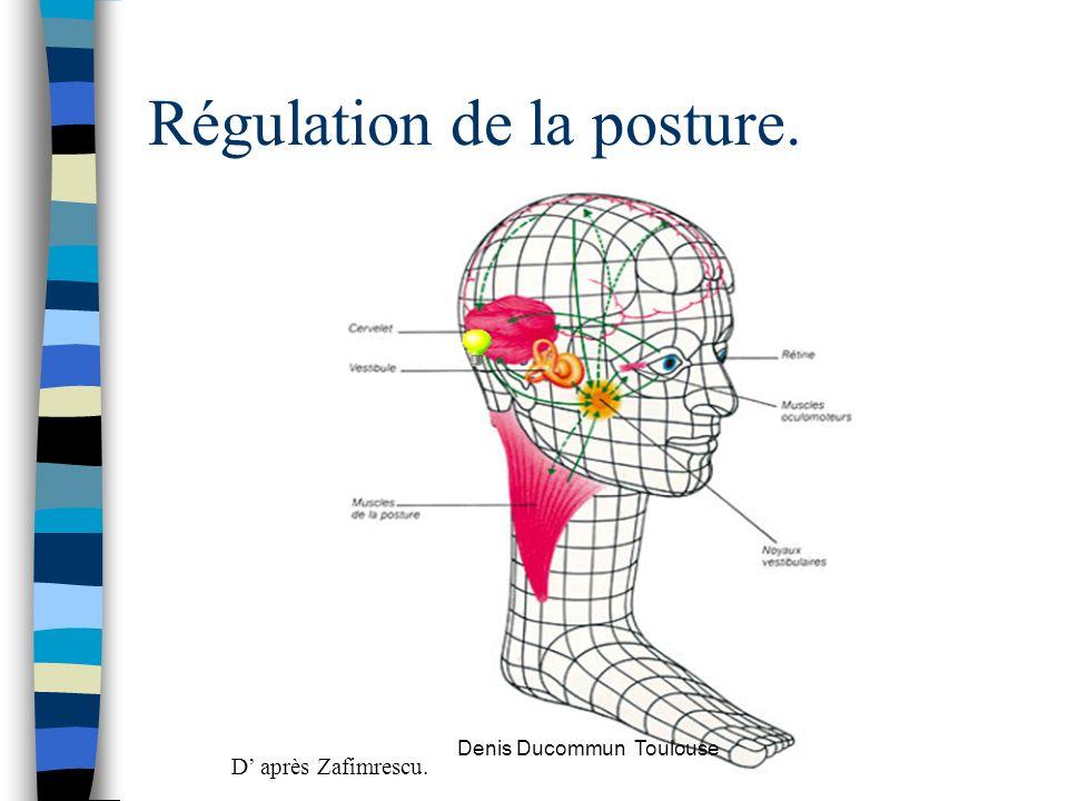 Régulation de la posture. D après Zafimrescu. Denis Ducommun Toulouse