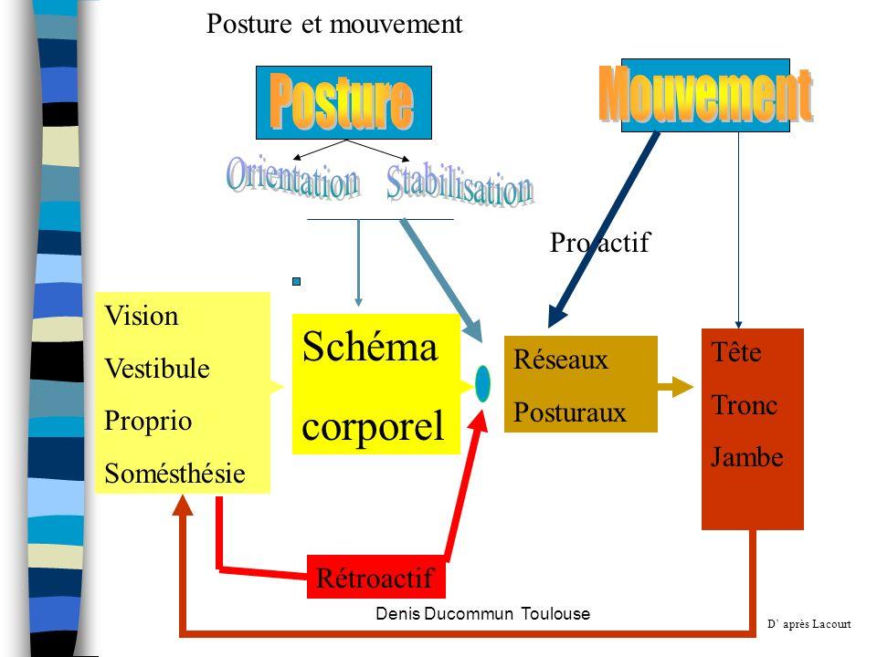 Schéma corporel Réseaux Posturaux Tête Tronc Jambe Vision Vestibule Proprio Somésthésie Rétroactif Pro actif Posture et mouvement D après Lacourt Deni