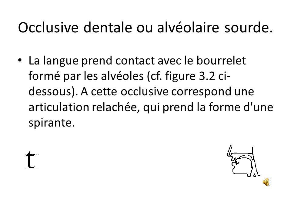 Occlusive dentale ou alvéolaire sourde. La langue prend contact avec le bourrelet formé par les alvéoles (cf. figure 3.2 ci- dessous). A cette occlusi