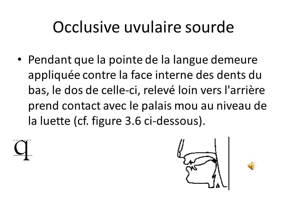 Occlusive uvulaire sourde Pendant que la pointe de la langue demeure appliquée contre la face interne des dents du bas, le dos de celle-ci, relevé loi
