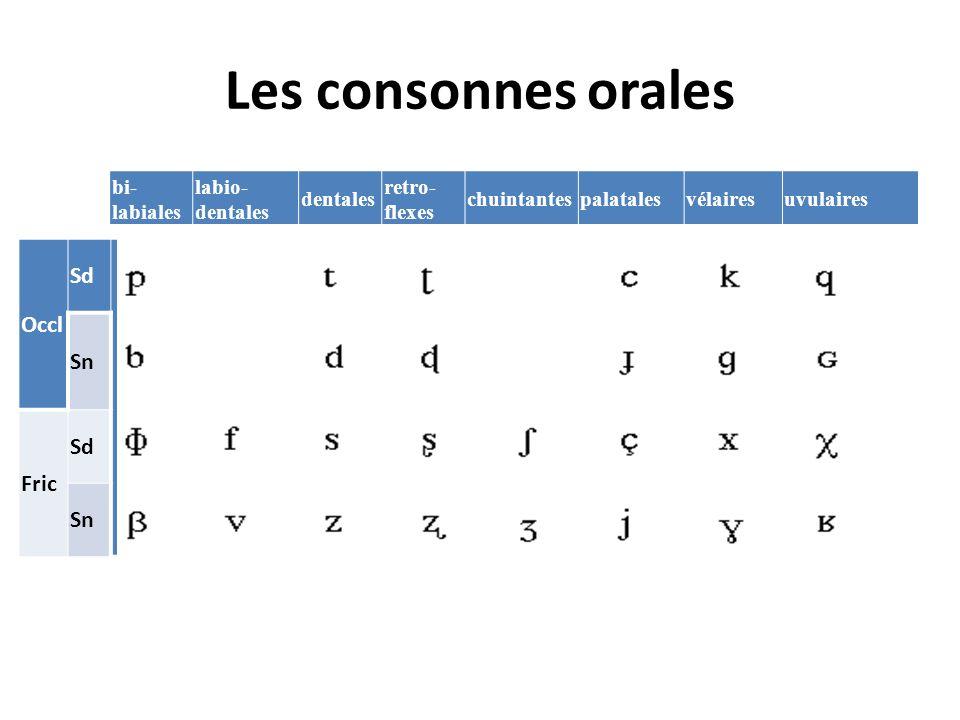 Les consonnes orales bi- labiales labio- dentales dentales retro- flexes chuintantespalatalesvélairesuvulaires Occl Sd Sn Fric Sd Sn