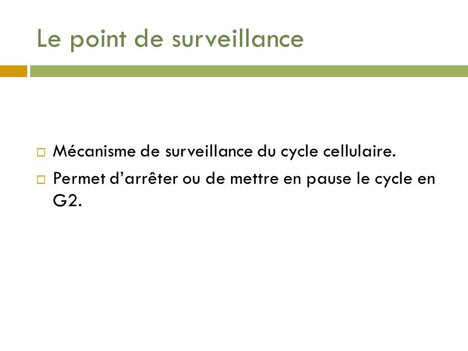 Le point de surveillance Mécanisme de surveillance du cycle cellulaire. Permet darrêter ou de mettre en pause le cycle en G2.