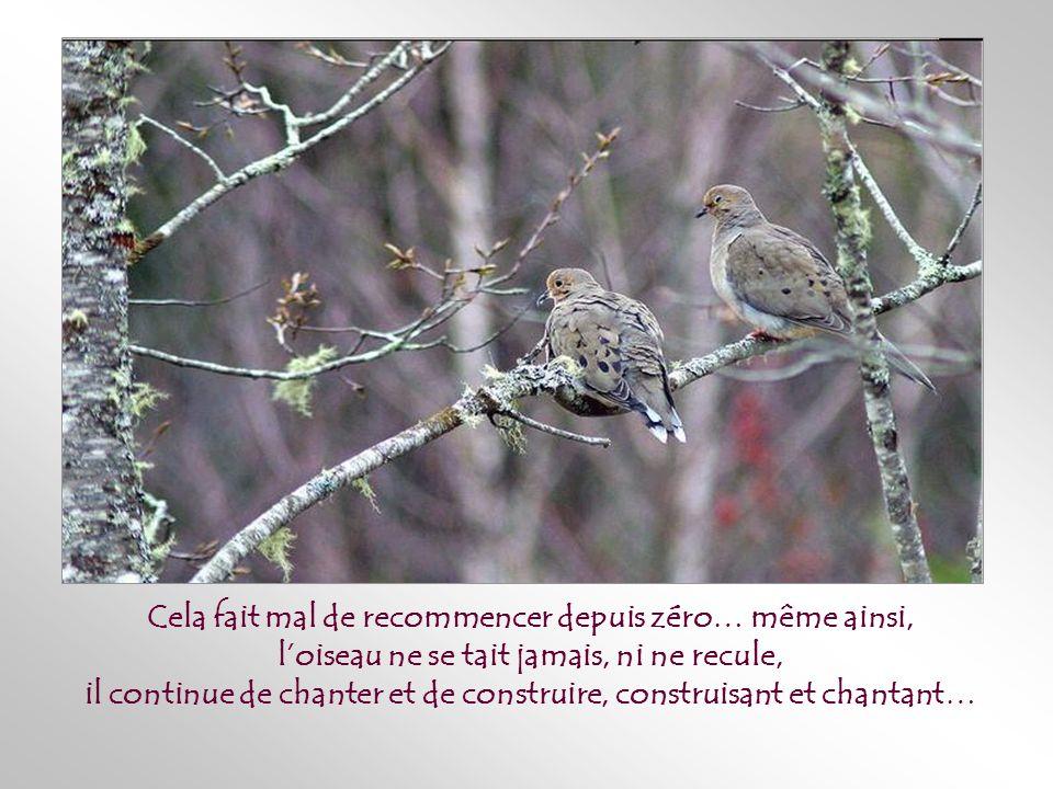 Parfois – très souvent – avant que naissent les oisillons, un animal, un enfant ou une tempête détruit une fois de plus le nid, mais cette fois, avec son précieux contenu…