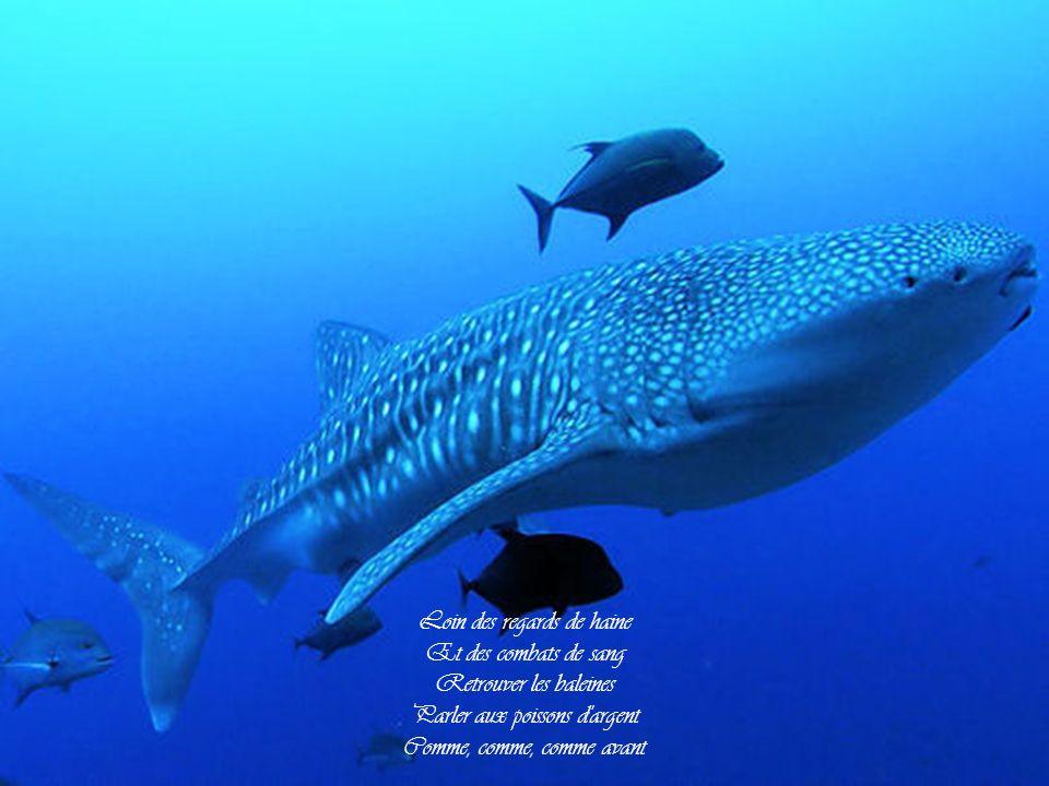 Loin des regards de haine Et des combats de sang Retrouver les baleines Parler aux poissons d argent Comme, comme, comme avant