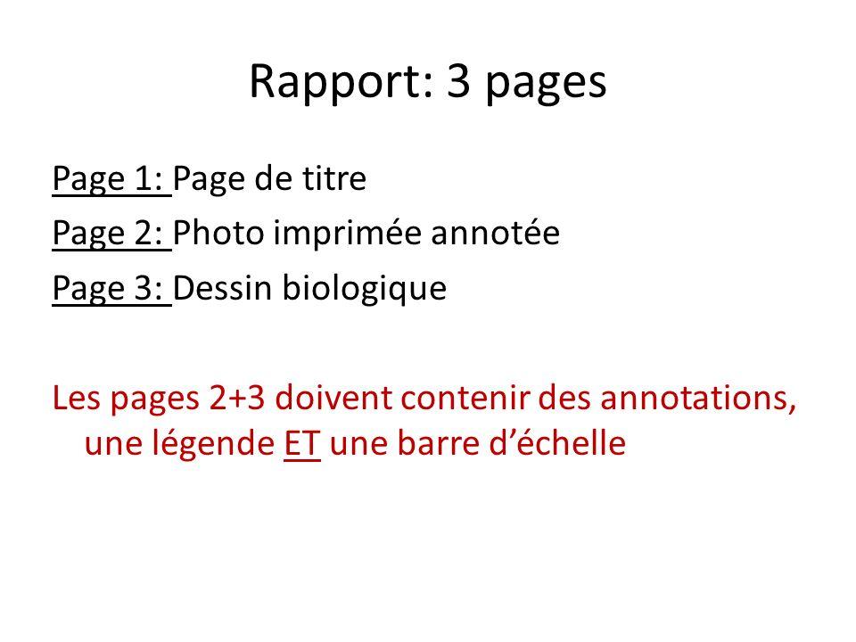 Rapport: 3 pages Page 1: Page de titre Page 2: Photo imprimée annotée Page 3: Dessin biologique Les pages 2+3 doivent contenir des annotations, une lé
