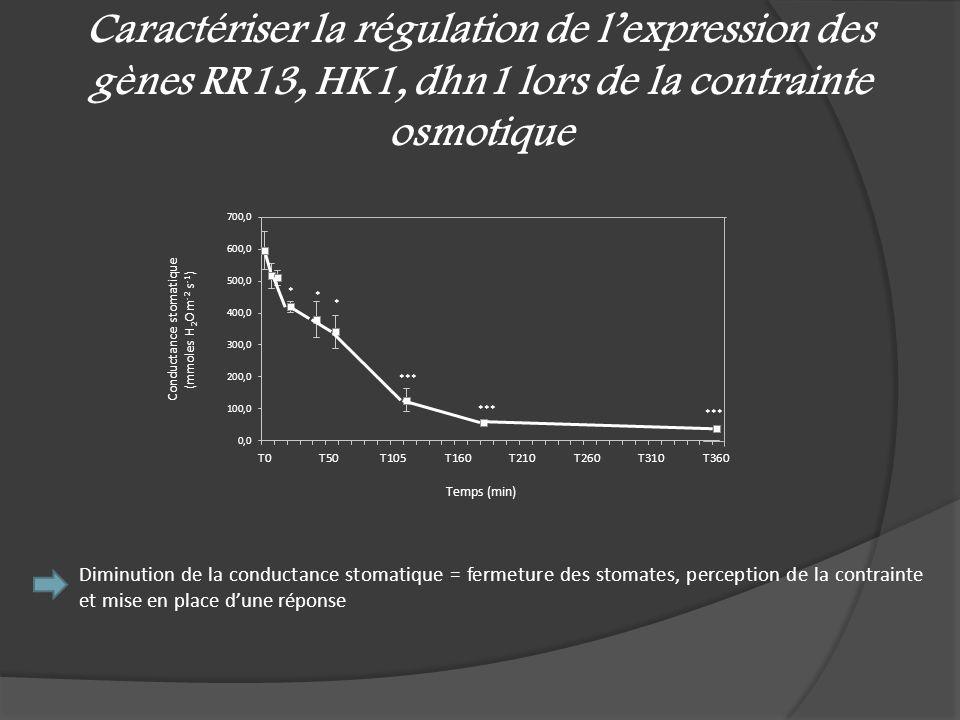Caractériser la régulation de lexpression des gènes RR13, HK1, dhn1 lors de la contrainte osmotique Diminution de la conductance stomatique = fermetur