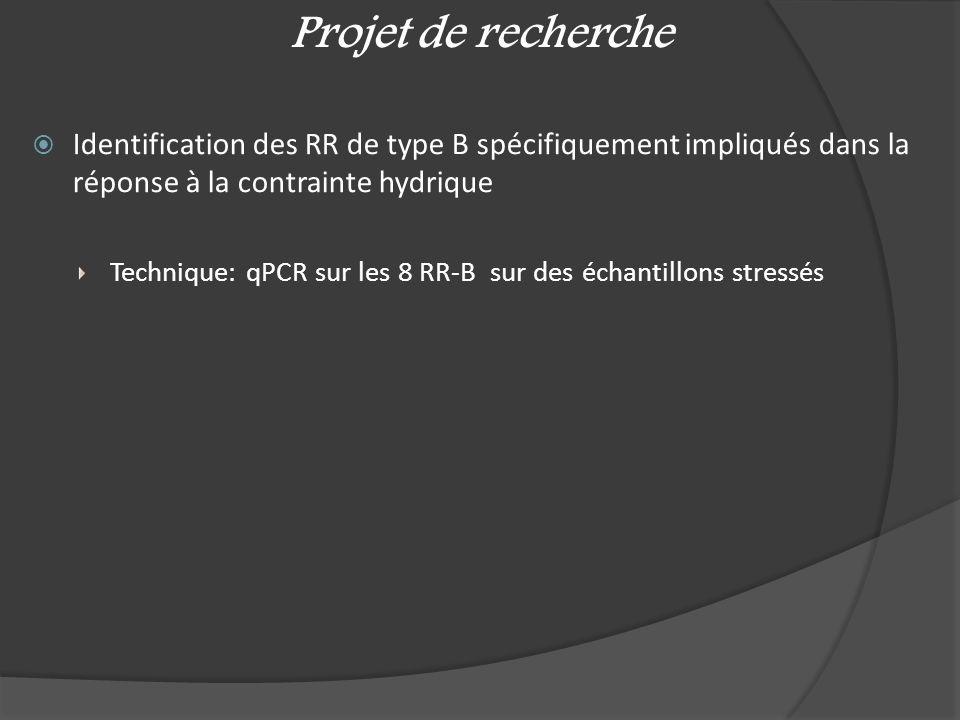 Identification des RR de type B spécifiquement impliqués dans la réponse à la contrainte hydrique Technique: qPCR sur les 8 RR-B sur des échantillons