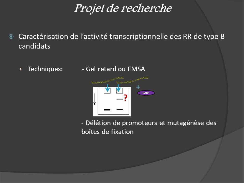 Caractérisation de lactivité transcriptionnelle des RR de type B candidats Techniques: - Gel retard ou EMSA - Délétion de promoteurs et mutagénèse des